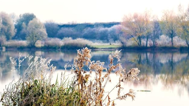 霜に覆われた植生と川岸の樹木。川に映る木々の反射