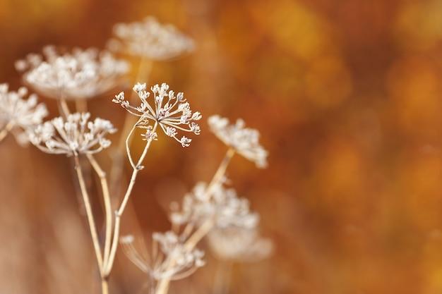 Покрытые инеем полевые цветы первый мороз на осеннем сельском лугу оранжевый осенний фон мягкий f