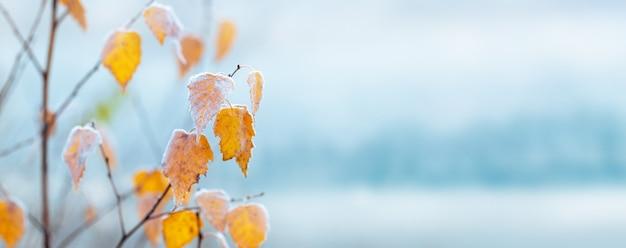 水色のぼやけた背景、コピースペースに霜で覆われた黄色の白樺の葉