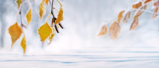 雪に覆われた平野を背景に、木に霜で覆われた黄色の白樺の葉。クリスマスと新年の背景