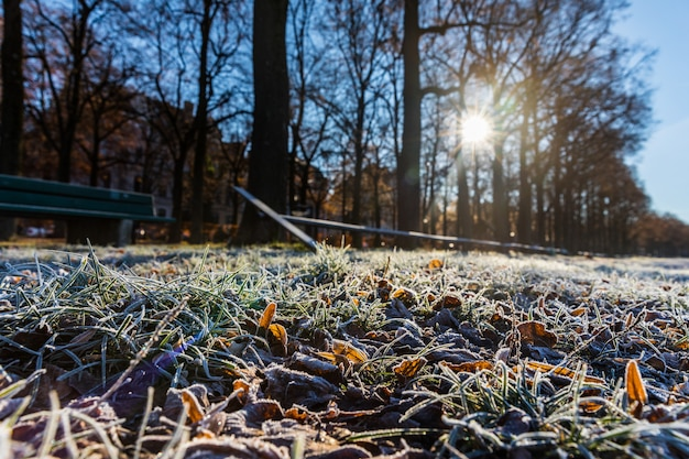 Frost on grass and leaves in winter morning