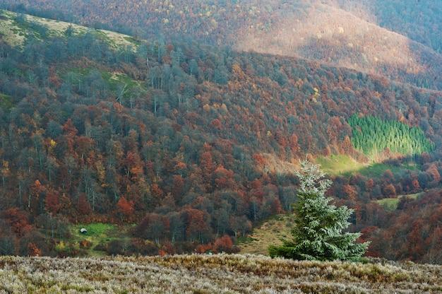 霜新年ツリー背景山の秋の森の美しい風景。