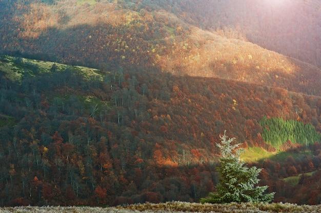 霜新年ツリー背景山の日光の秋の森の美しい風景。