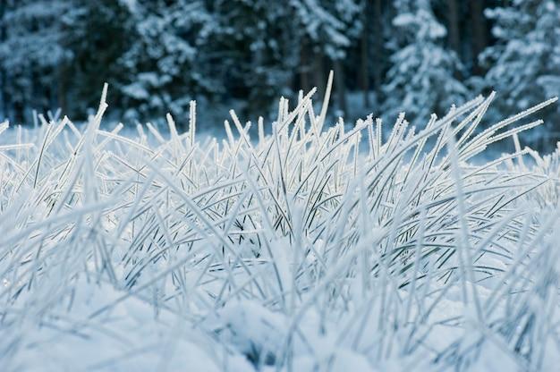 枝に霜が降りる