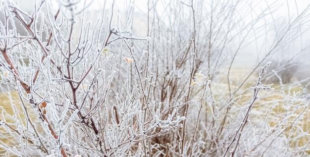 Иней на деревьях и кустах. холодная зимняя погода.