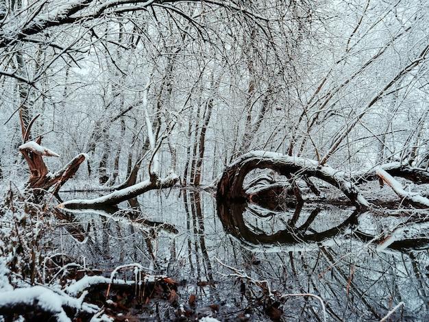 Frostdriftwood와 눈, 폴란드에있는 강에 나무