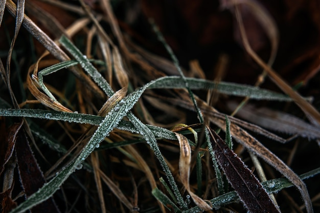 Frosted grass winter background, first frost in december