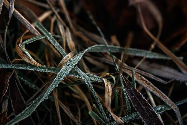 Замороженная трава зимний фон, первый мороз в декабре