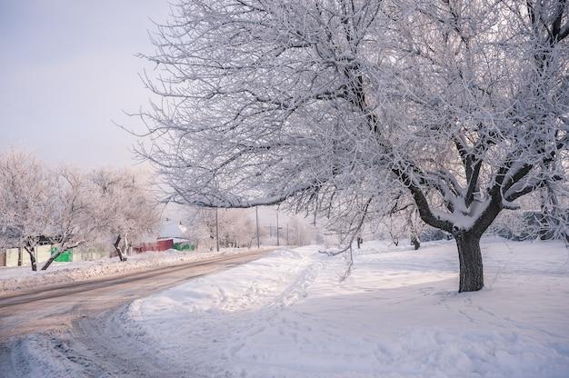 마을의 서리가 내린 날, 나무가 눈을 덮었습니다. 아름다운 겨울 풍경