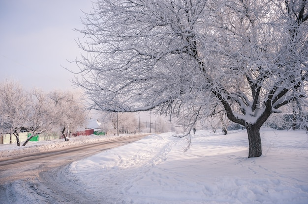 Frosty day in village, trees covered snow. beautiful winter landscape