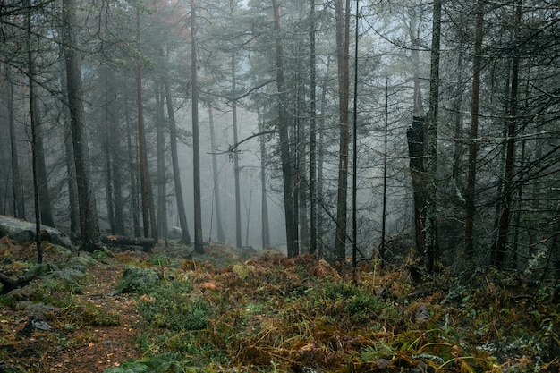 Frosty morning in dark rainy forest