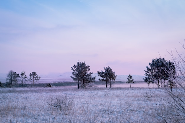 Frosty morning in the winter forest. trees in hoarfrost on the background of a snowy field and forest. winter fairy tale.