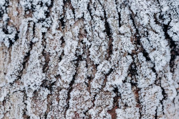 Frosty tree bark. beautiful winter texture