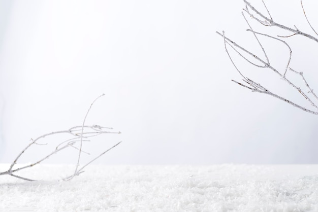 Frosty tree branch with snow in winter on white . attach your product
