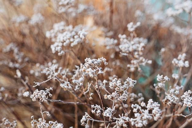 Frosty wildflower buds in winter textured background