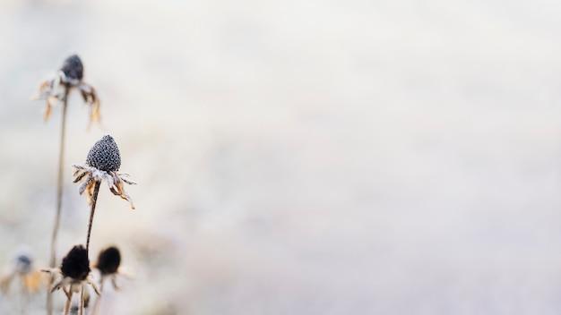 겨울 질감 배경에서 서리가 내린 야생화