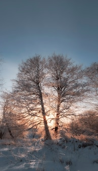 Frosty winter evening in forest, trees in snow and hoarfrost