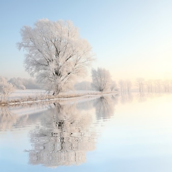 Frosty winter tree against a blue sky with reflection in water