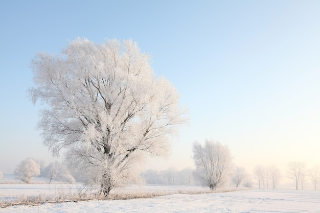Морозное зимнее дерево в поле солнечным утром