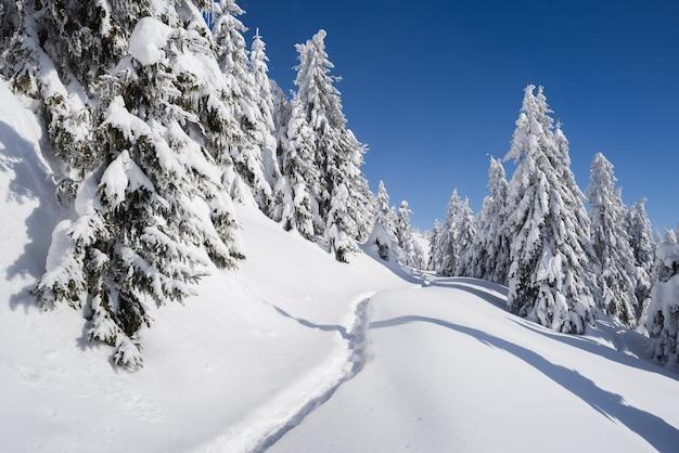晴れた日の凍るような冬の天気。山にモミの森がある雪景色。雪の中の小道