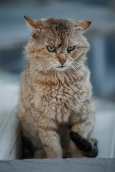 Frowning cat on the street
