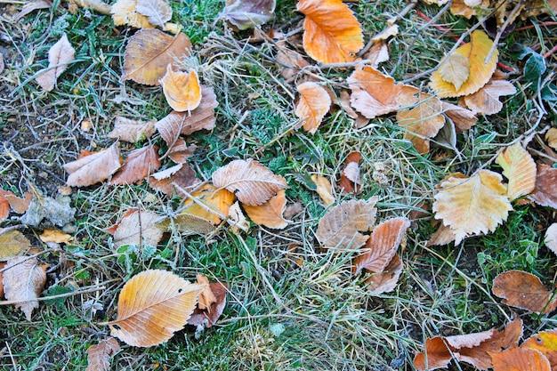 Замороженные осенние листья