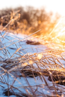 Замерзшие красивые растения, покрытые сосульками на солнце. зимний фон. выборочный фокус. малая глубина резкости.