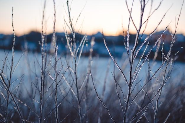 Замерзшие красивые растения, покрытые сосульками. зимний фон. выборочный фокус. малая глубина резкости.