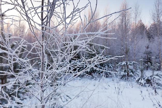 凍った木の枝