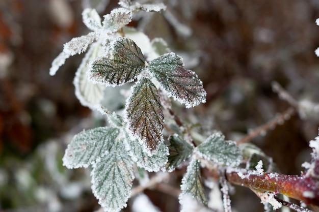 흐린 된 배경으로 눈으로 덮여 얼어 붙은 가지