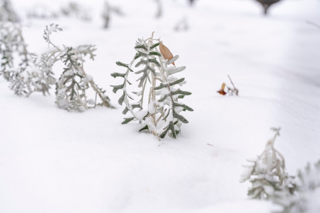 Frozen dry grass like a fairytale winter forest