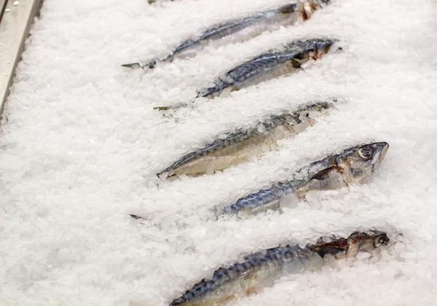 カウンターで凍った魚。店やレストランで魚のサバやニシン。新鮮な冷凍魚。高品質の写真