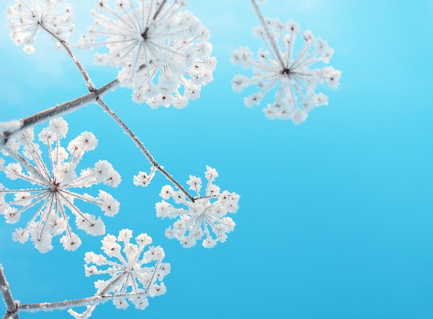 Frozen flower on background blue sky