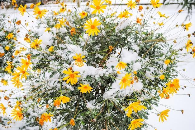 ドルマバフチェ宮殿の雪の中で冷凍の花