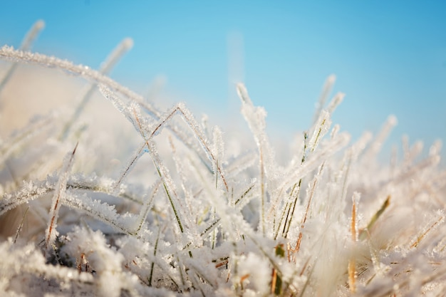 Frozen grass on blue sky backgound.