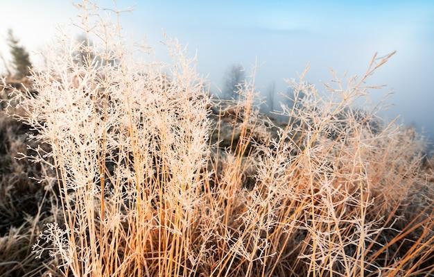 아름다운 푸른 하늘과 푹신한 하얀 안개를 배경으로 하얀 서리로 덮인 얼어붙은 풀