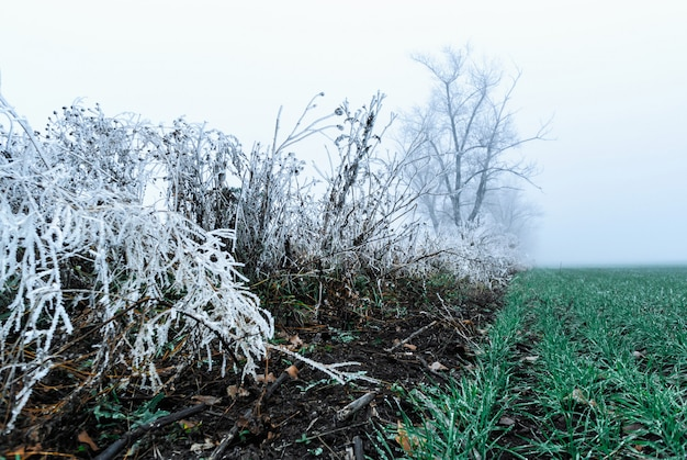 Frozen ice covered bushes trees. winter begins