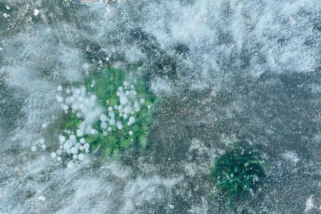 雪の中で凍った氷の乾いた草がクローズアップ