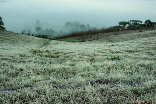 ブラジルのウルビシの寒い山々の凍った風景