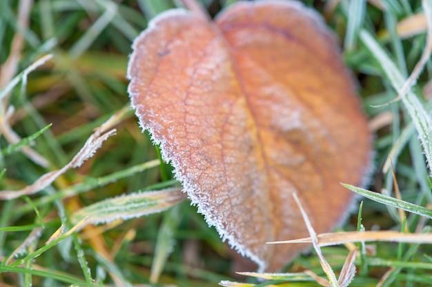 Frozen leaf in autumn