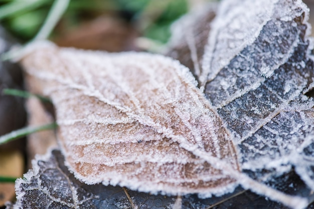 Frozen leaf with ice texture close up at nature outdoors