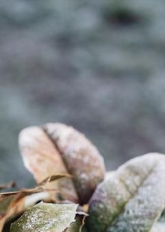 Frozen leaves in winter weather