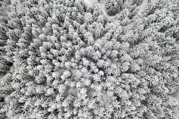 Замерзший сосновый снежный лес зимой. аэрофотоснимок елей, покрытых снегом.