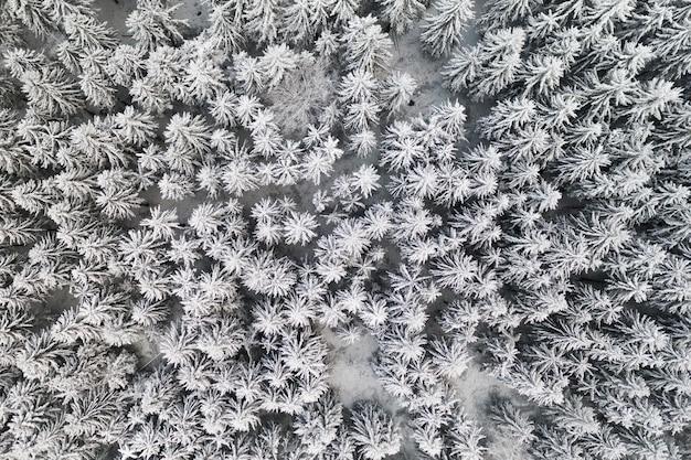 Замерзший сосновый снежный лес зимой.
