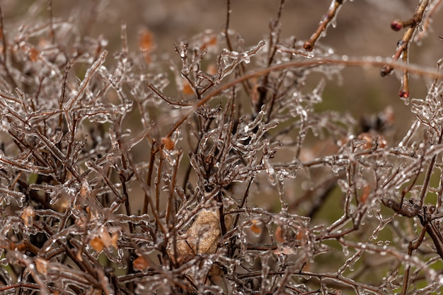 Frozen plants covered in thick layer of ice