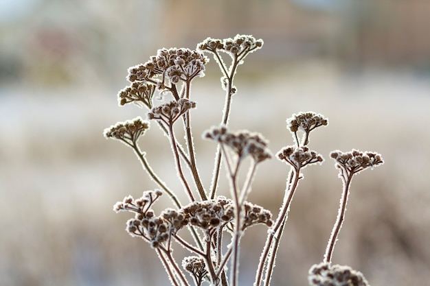 Frozen plants in early morning close up in winter