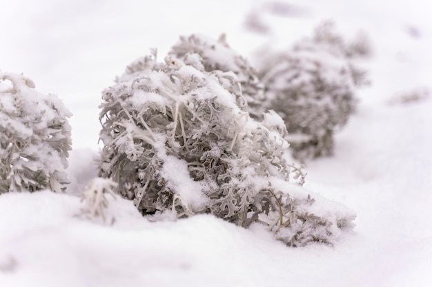 Замороженные растения крупным планом зимой. микро сказочный зимний лес
