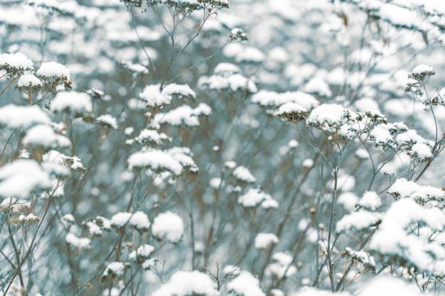Замороженные растения крупным планом зимой.