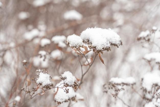 Замороженные растения рано утром крупным планом зимой