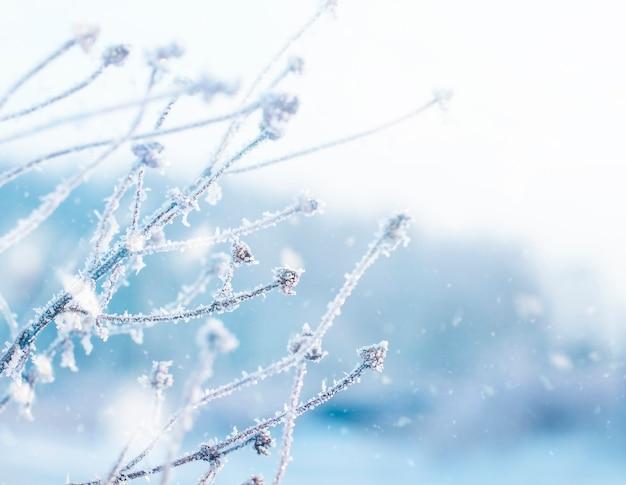 냉동 식물. 겨울 자연 벽